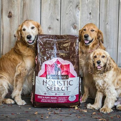 Three dogs sitting next to Holistic Select dog food