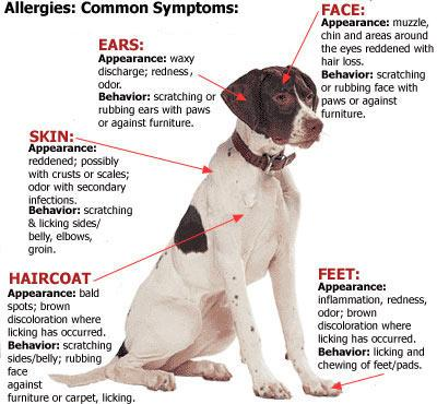 Pet allergies infographic