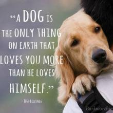 A dog is the only thing on earth that loves you more than he loves himself. - Josh Billings