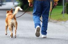 walking-the-dog